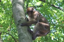 Affengehege im Wildpark Daun 5 sterne ferienhaus Geysir Andernach Das vielleicht schönste Ferienhaus im Bereich Eifel Mosel Maifeld