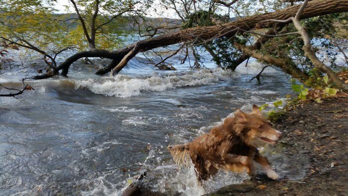 Hundeparadies Maifelder Uhlenhorst - Hier sind Hunde herzlich willkommen